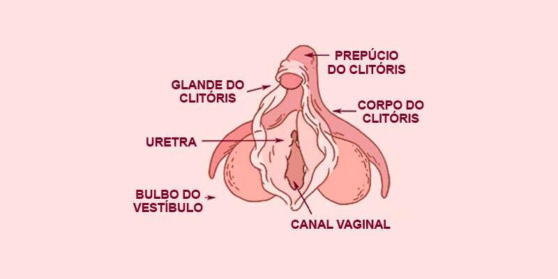 A importância do clitórias para a vida sexual feminina