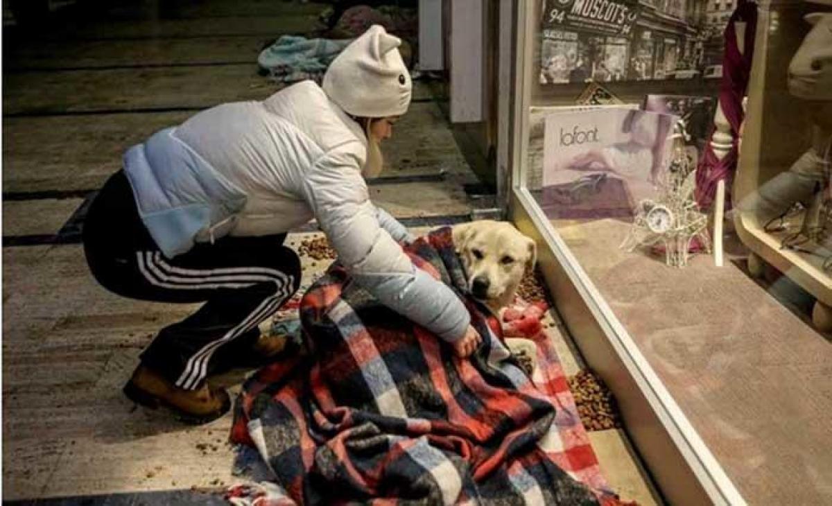 Doe agasalhos para animais de rua