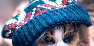 Gatos fofos no inverno 2017
