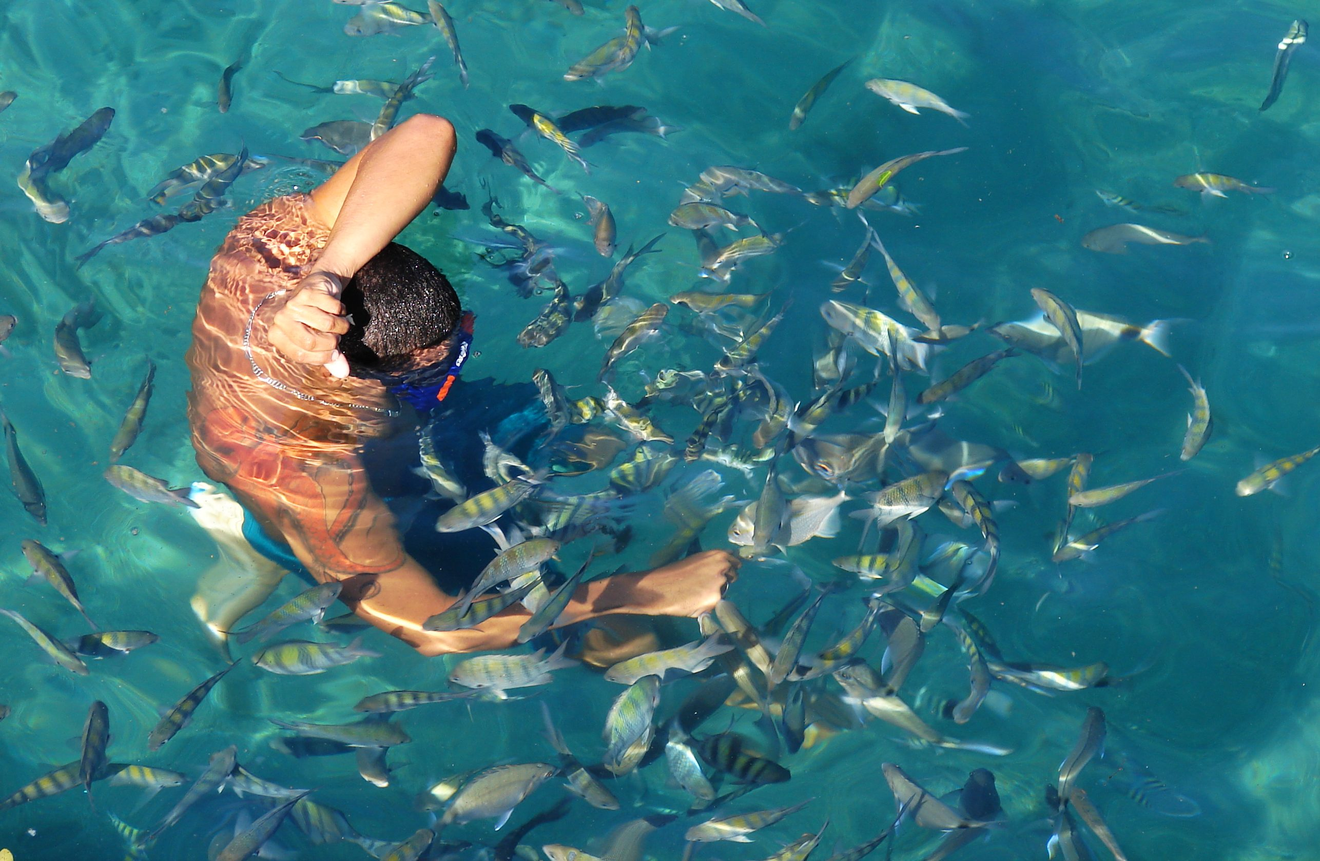 Em angra dos reis dá para mergulhar com os peixes em águas cristalinas