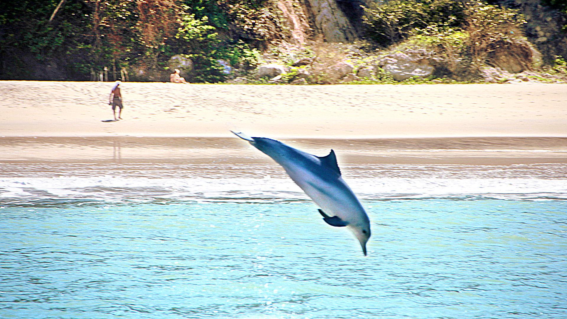 Baia dos Golfinhos é um dos melhores pontos turísticos