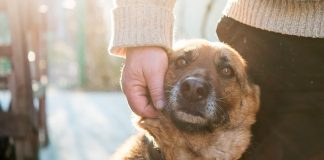 Como ajudar animais de rua no inverno