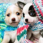 Cachorros mais fofos do Instagram